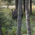 fredrik_broman-king_of_the_forest-328