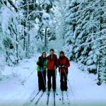 Snowy trees on ski tour