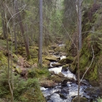 wild river stockhholm