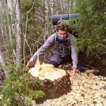 beaver tree high coast