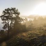 henrik_trygg-grinda-4144