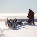 fredrik_broman-dog_sledding-3789-1