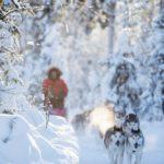 fredrik_broman-dog_sledding-3784